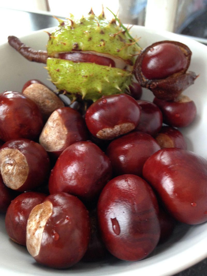 How to: Make Chestnut Decorations