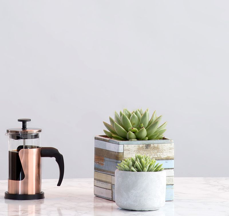 Adding Greenery to your home - succulents